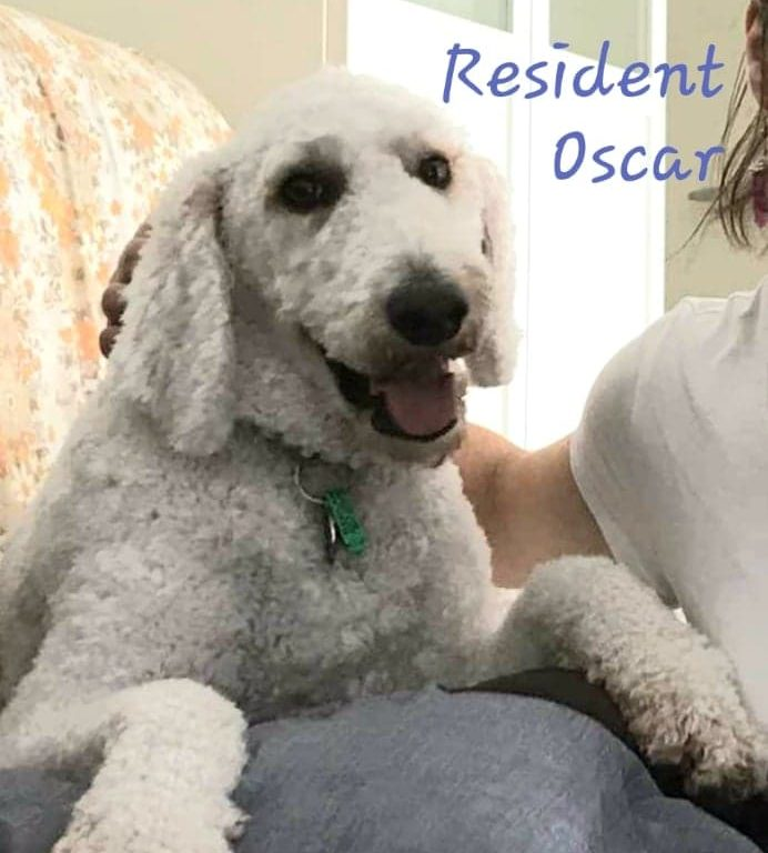 calming pet furry friendly relaxation